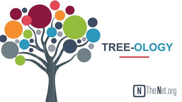 Tree-ology – The Olive Tree